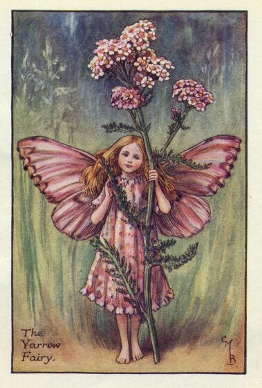 Yarrow_flower_fairy