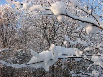 Snowpuffs12609